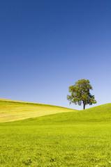 Deutschland, Bayern, Allgäu, Baum in der Landschaft