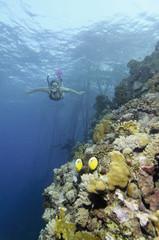 Ägypten, Rotes Meer, Schnorcheln Frau neben Korallenriff