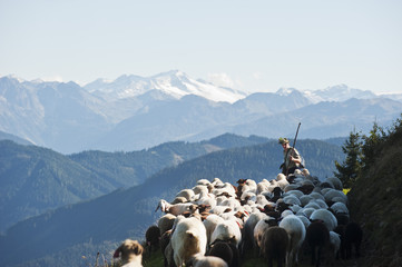 Österreich, Salzburger Land, Schäfer hütet Schafe