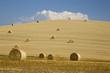 Italien, Toskana, Strohballen auf Maisfeldern