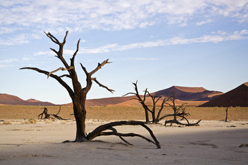 Afrika, Namibia, Deadvlei, Bare Bäume in der Wüste