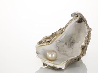 Perle in einer Austernschale