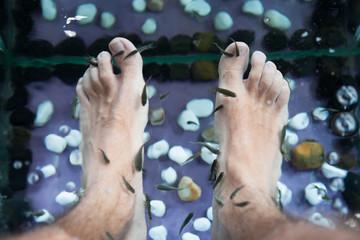Fish Pedicure Therapy