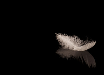 One white duck feather on black reflective surface