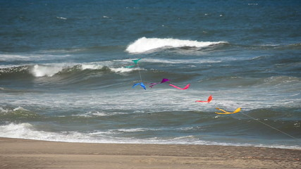 Kites and Pacific Ocean
