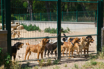 Dog shelter in Spain