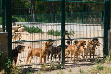 Dog shelter in Spain