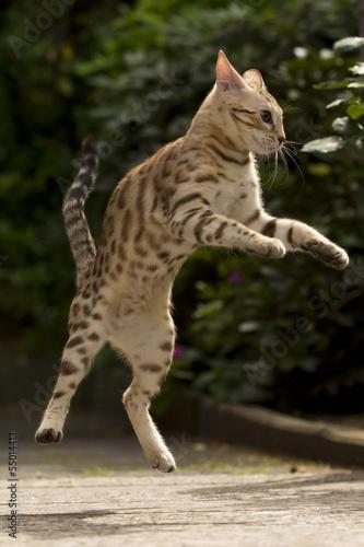 Papiers peints Tigre Snow Bengale lustig