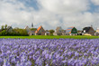 Village Den Hoorn at Dutch Texel