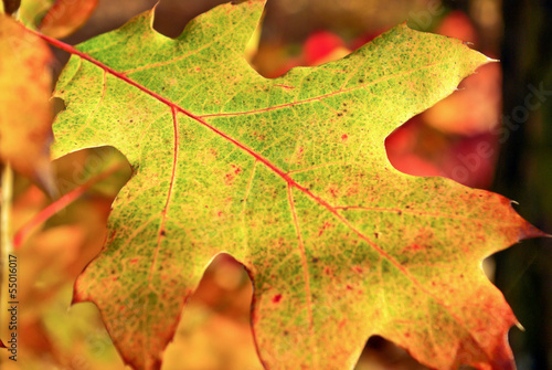 Yellow,fallen,dry oak leaf in autumn.