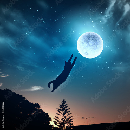 Deurstickers Volle maan Cat catching moon