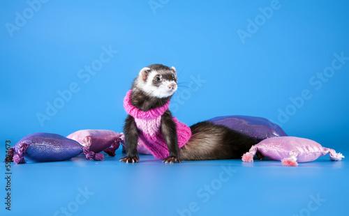 hilarious ferret