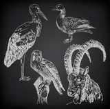digital drawing of stork, falcon, goose  and  goat on black back