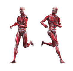 Male Musculature Running