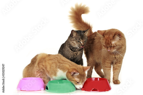 Futterneid bei Katzen - cat at food bowl