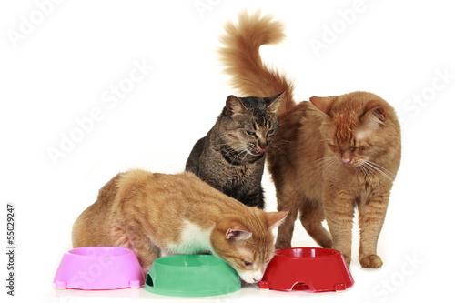Futterneid bei Katzen - cat at food bowl