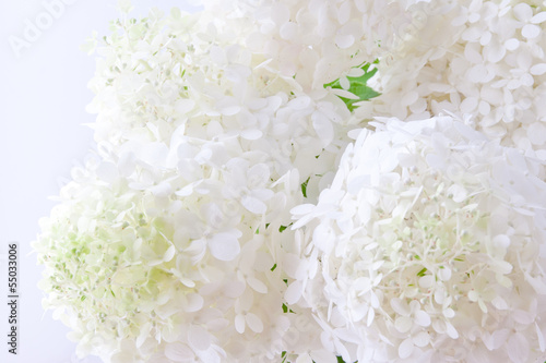 Keuken foto achterwand Hydrangea White hydrangea flowers blur background. shallow dof