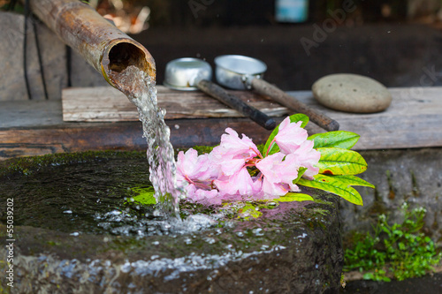 Rhododendron flower floating in a stone basin fed by a bamboo pi