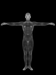 3D wireframe mesh human man anatomy