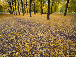 Fallen leaves in the park in autumn.