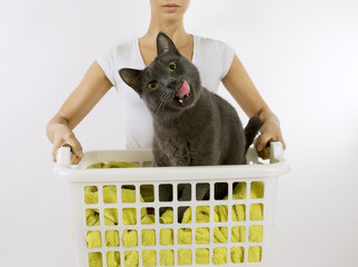 Funny cat wash - cat in white plastic basket with colorful laund