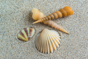 seashells on the sand beach background