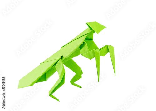 Origami mantis isolated on white background - 55048495