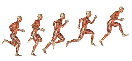 Muskelstudie beim Ansatz zum Sprung