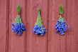 three blue cornflower bunch on red house wall