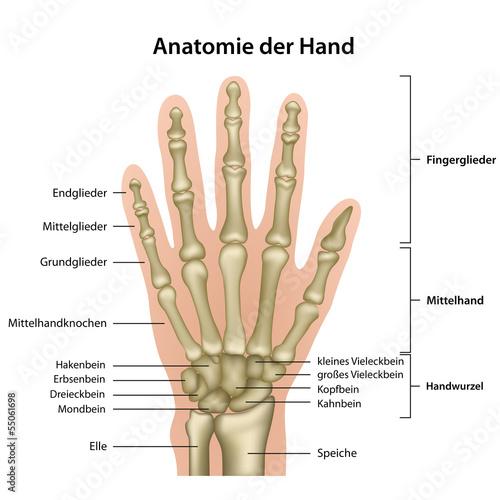 GamesAgeddon - Anatomie der Hand mit Erläuterung , deutsch ...