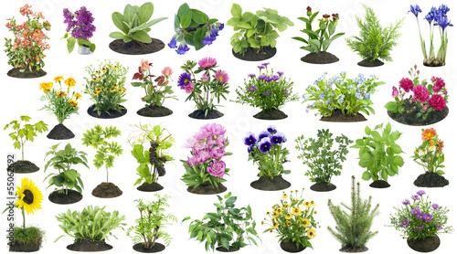 Fotobehang Zonnebloemen Garden plants grow in soil set