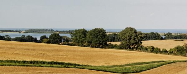 Landschaft im Sommer