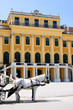 Schonbrunn Palace, Vienna, Austria with carriage horse