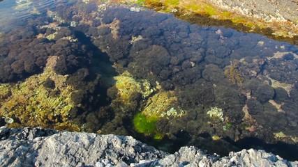 marine plants on the rocks filmed with slider