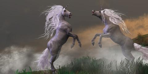 Unicorn Stallions Fighting