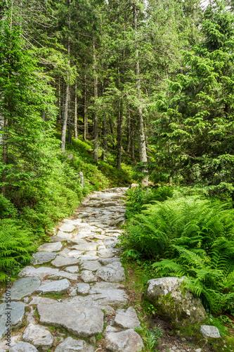 Fototapeta Stone path leading to the peak in summer