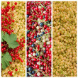 Johannisbeeren - Ribes