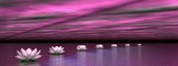 Lilie wodne schodzą na słońce - renderowanie 3D