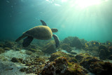 Sea turtle swimming underwater in paradise tropical ocean
