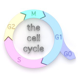Diagram of the Cell Cycle