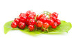Red Currant on green leaves
