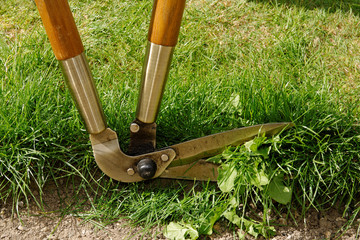 Lawn Edge Being Trimmed