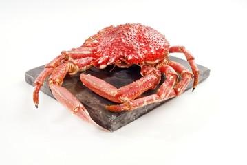 Wild Red Crab