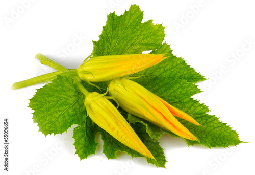 Pumpkin blossom and green leaf isolated on white