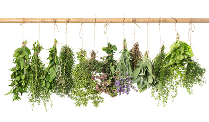 varios fresh herbs hanging isolated on white