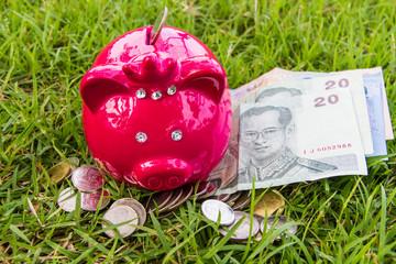 pig bank on grass