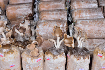 Close up of organic mushroom bag ready for cultivation