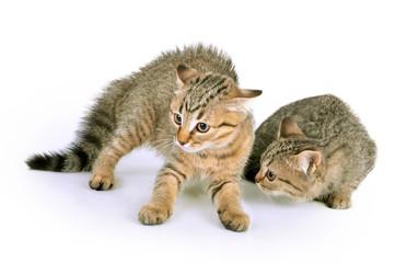scared kittens