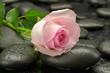 Róża na kamieniach do spa