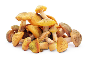 Autumn mushrooms,isolated on white background .